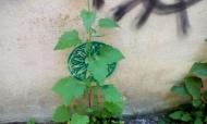 Una planta en laMilagrosa