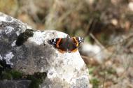 Mariposas en diciembre